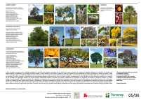 Concurso Nacional – Parques de Águas Claras - DF – Finalista 40 – Prancha 05